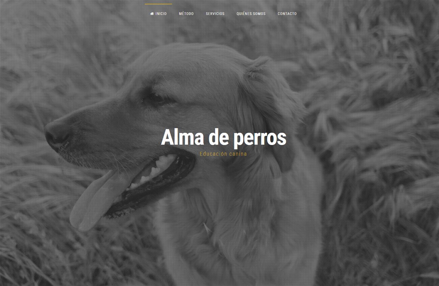 diseño web alma de perros educación canina
